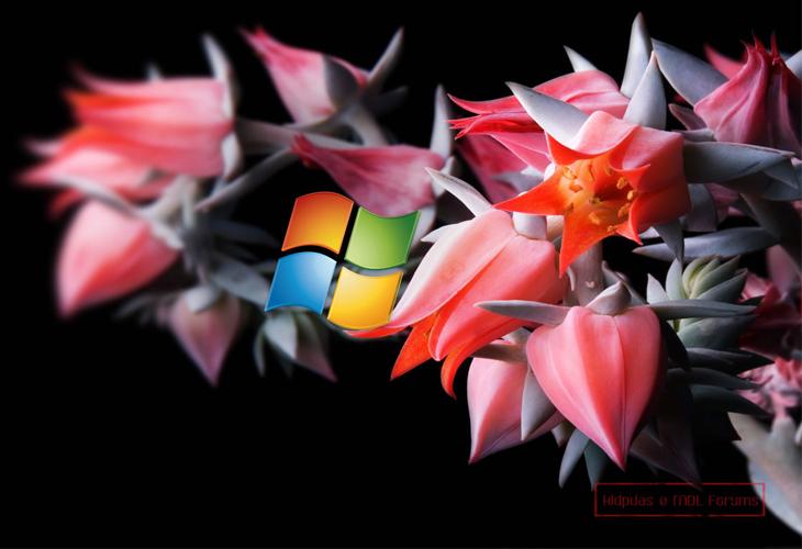 MS Windows-8