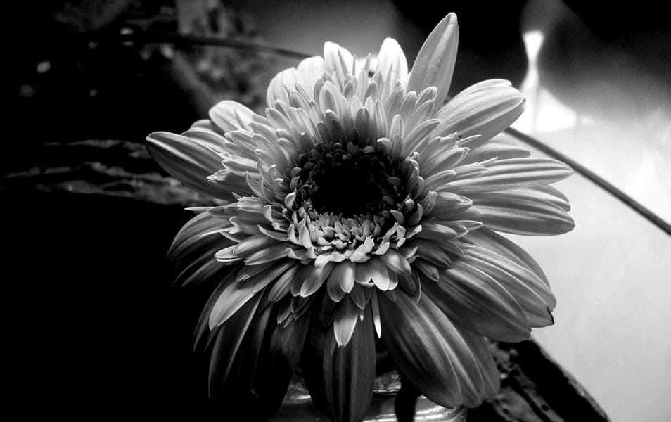 BW shot of the flower
