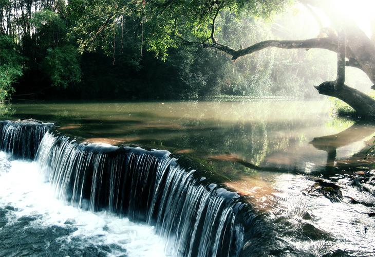 Rainforest Creek Wallpaper - cssauthor.com
