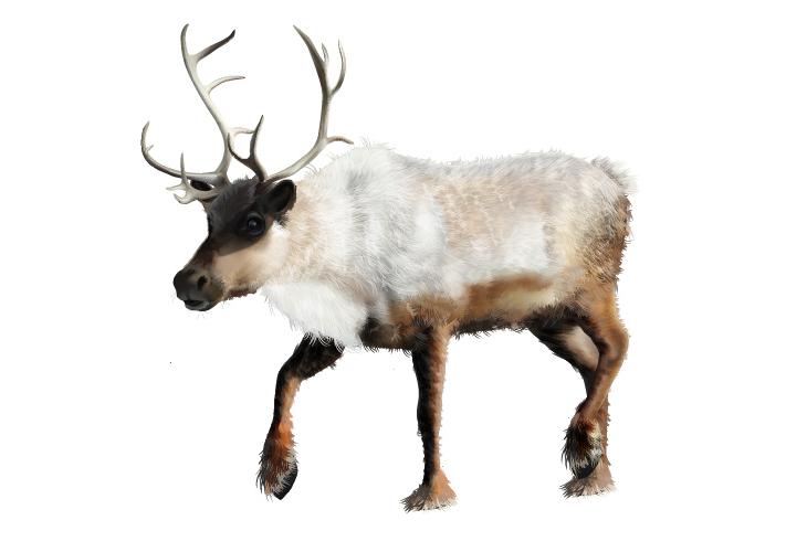 Realistic Reindeer with Gradient Mesh