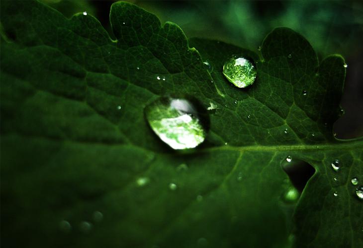 macro droplets wallpaper - cssauthor.com