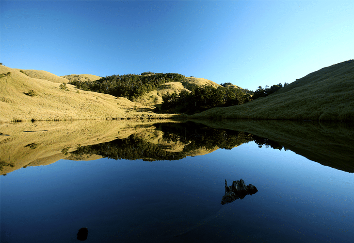 Reflecting Pond - Windows 8 Wallpaper