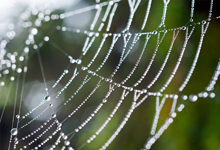 Spider Web - Windows 8 Wallpaper