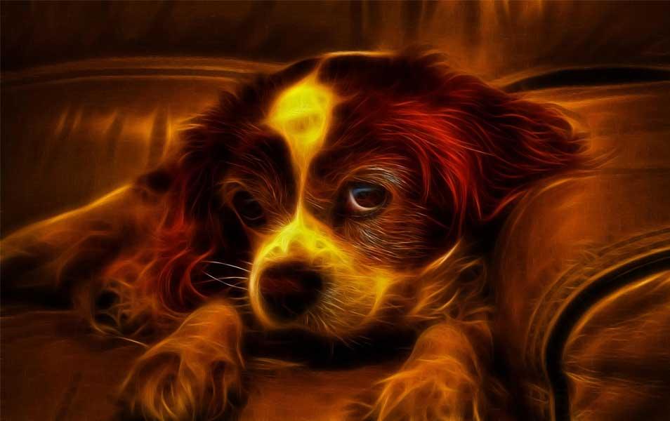 3D Dog Wallpaper