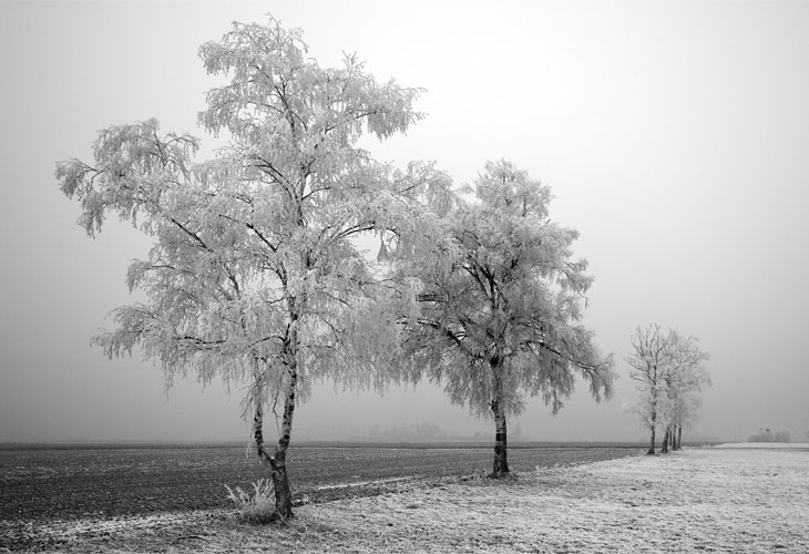 Black-And-White-Winter