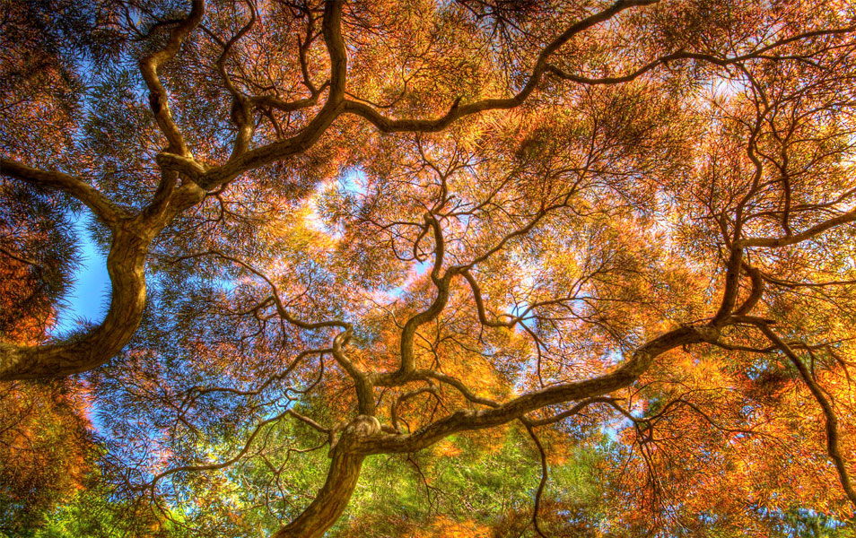Dancing Branches Nature Photography