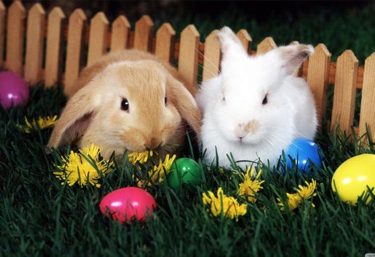 Easter-Egg-Hunt-wallpaper