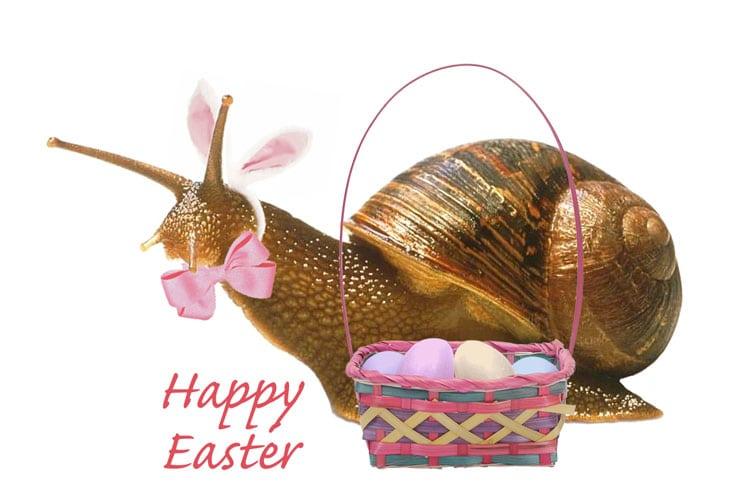 Easter-Snail