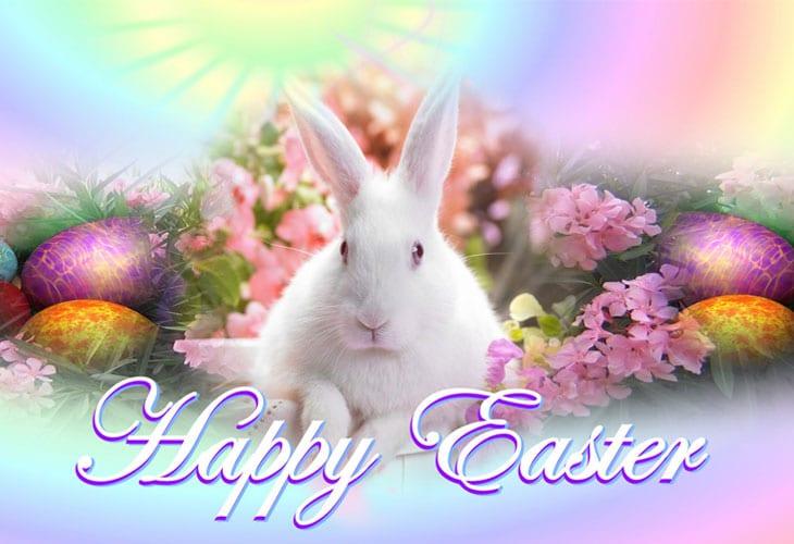 Happy Easter Bunny HD Wallpaper