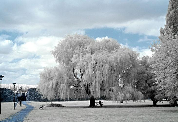 Serenity-in-Infrared