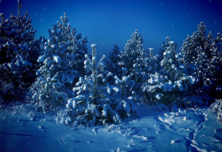 Siberian-Winter