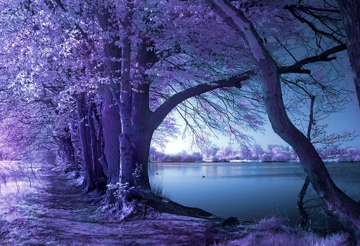 Spring-Wolni-Infrared