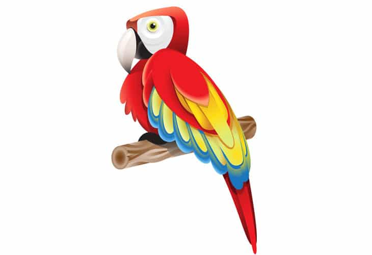 Colorful-Parrot