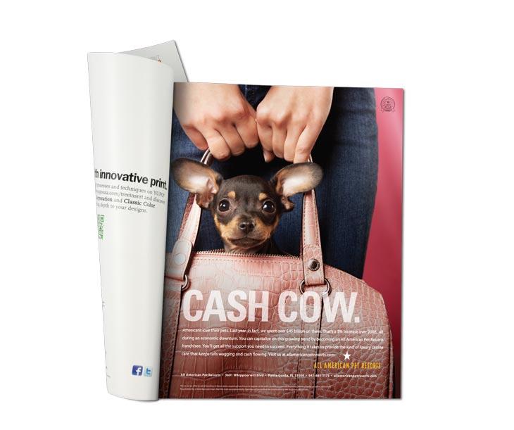 All American Pet Resorts Print Ads