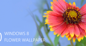 Desktop Wallpapers – 10 Free HD Flower Wallpaper for Windows8