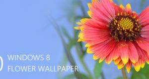 Desktop Wallpapers – 10 Free HD Flower Wallpaper for Windows8