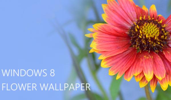 Desktop Wallpapers – 10 Free HD Flower Wallpaper for Windows8 -cssauthor.com