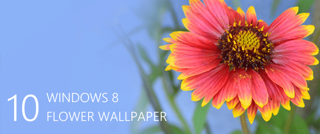 Desktop Wallpapers – 10 Free HD Flower Wallpaper for Windows8 -cssauthor.com