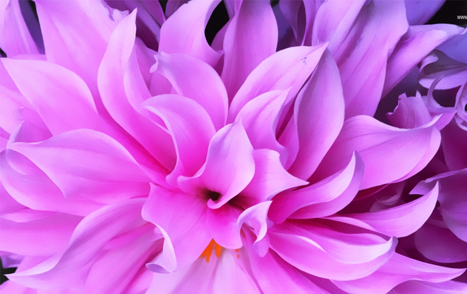 Windows 8 Flower Wallpaper No: 5