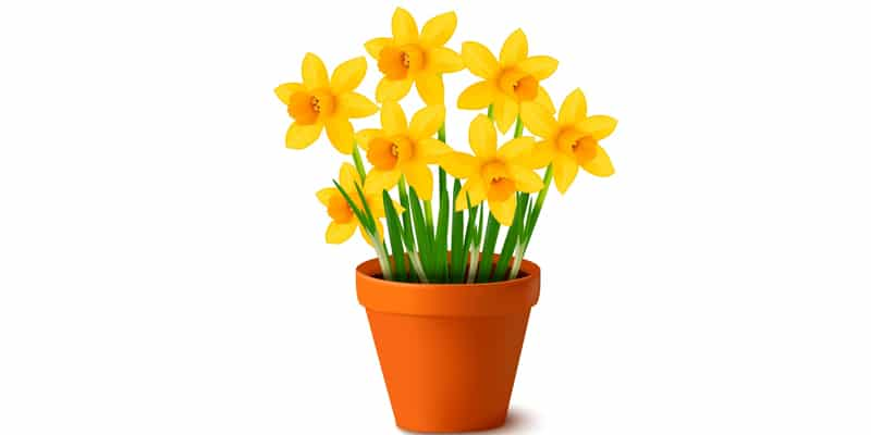 Pot of Daffodils With Gradient Mesh
