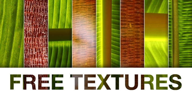 Bananic Free Texture