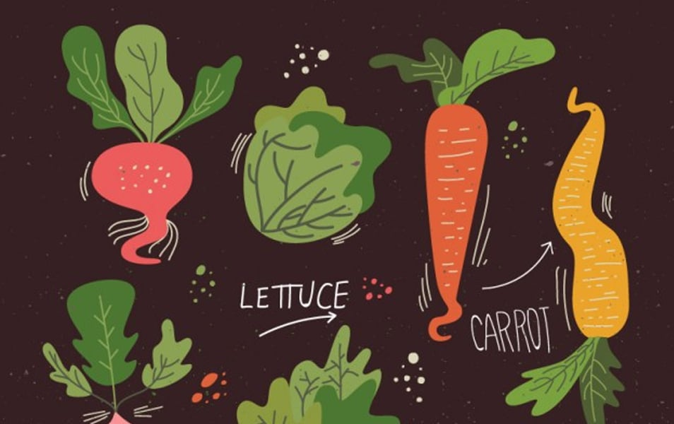 Illustrated Veggies Collection